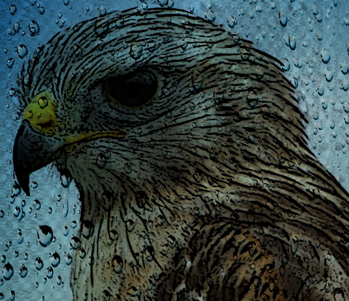 Hawk learns in this African Folktale friends do not support you when you most need it.