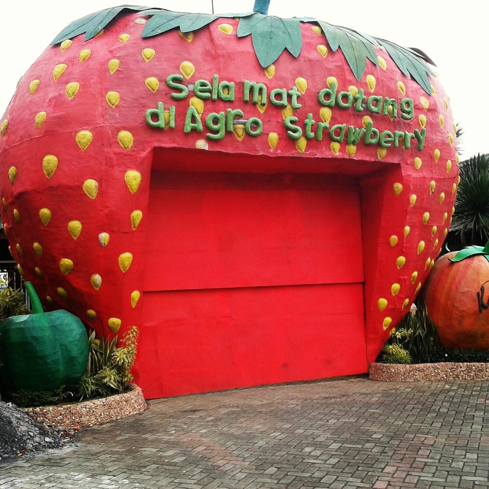 Wisata Kebun Strawberry Malang