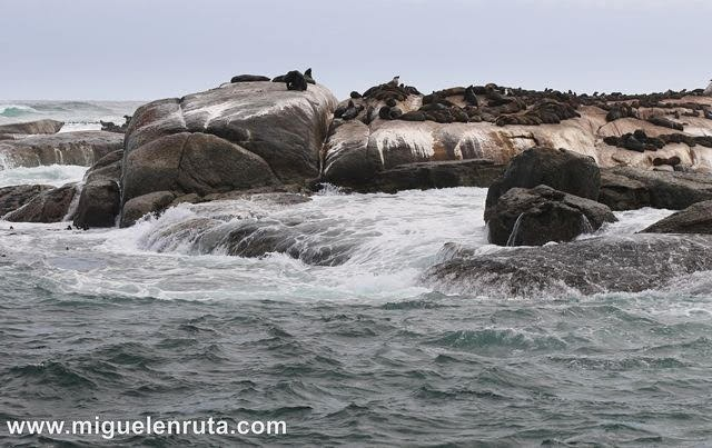 León marino de El Cabo