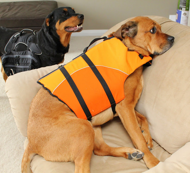 Canine Equipment Backpack Dog Lifejacket