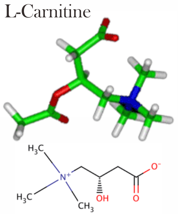 √ Manfaat L-Karnitin (L-Carnitine): Sumber, Fungsi, Dosis dan Efek Samping
