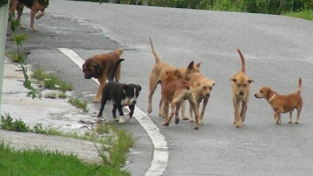 Σοκαριστικό: Αγέλη σκύλων δάγκωσε 58 φορές 17χρονη στη Θεσσαλονίκη