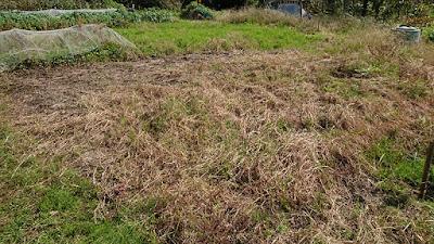この荒れた畑を整備したので結果は下の画像で
