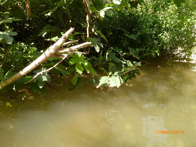 נחל פרת מפגש בין מים לצומח