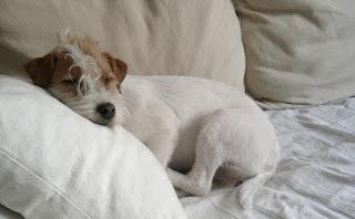 dormindo com seu cachorro