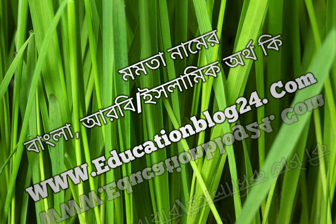 Momota name meaning in Bengali, মমতা নামের অর্থ কি, মমতা নামের বাংলা অর্থ কি, মমতা নামের ইসলামিক অর্থ কি, মমতা কি ইসলামিক /আরবি নাম