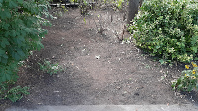 Beaconsfield Village front yard Toronto garden cleanup after by Paul Jung Gardening Services--a Toronto Gardening Company