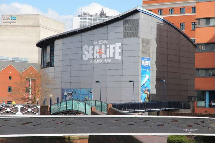 visiting the sea life center is one of the best things to do in birmingham uk when there are so many fish