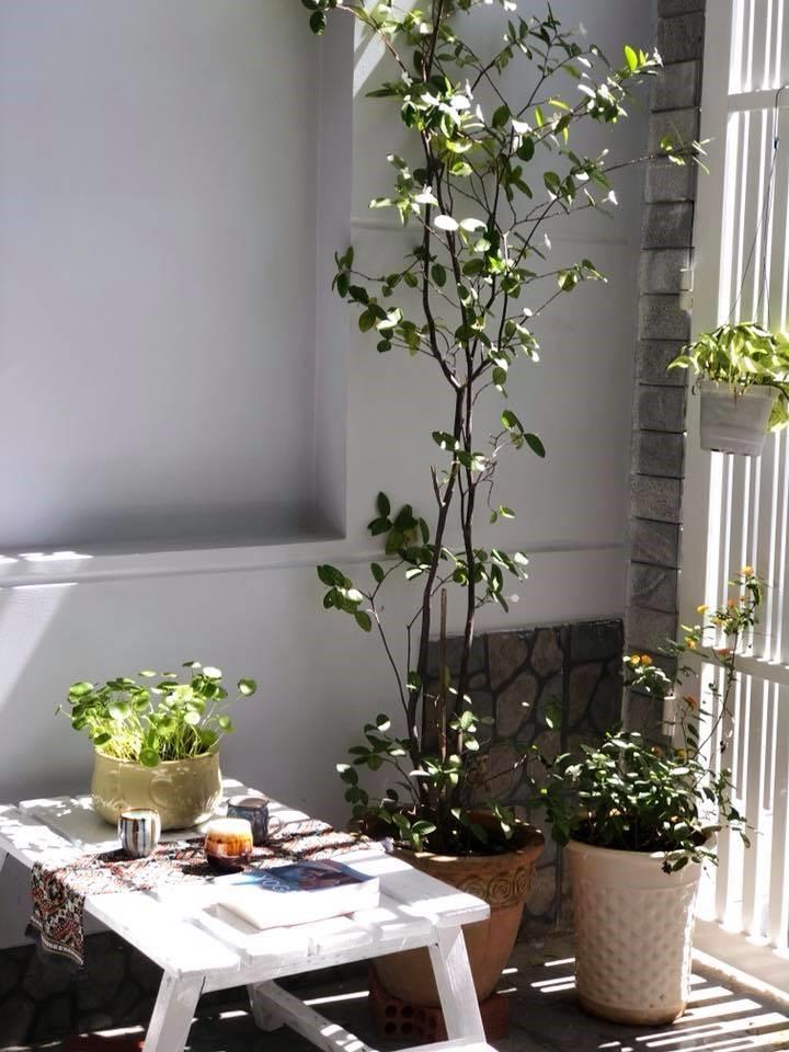 Houseplants Vũng Tàu homestay – Nơi nuôi dưỡng xúc cảm cho chuyến đi