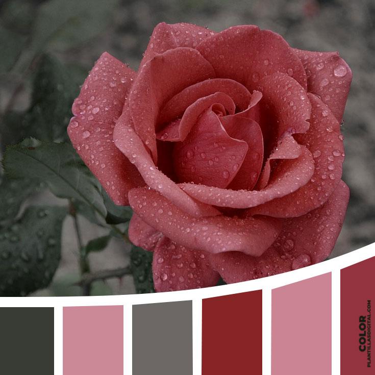 color_575