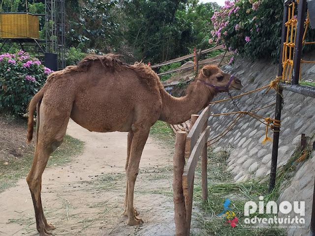Zoocobia Fun Zoon Clark Pampanga