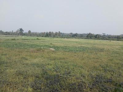 20Bigha Land For Sale Motadhak Kotdwara Uttarakhand-Uttarapradesh3