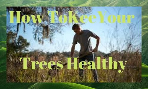 How To Keep Your Trees Healthy