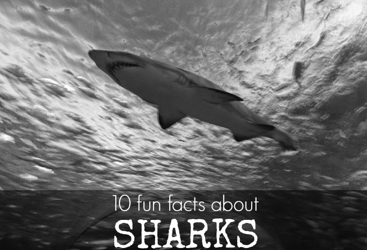 10 facts about sharks