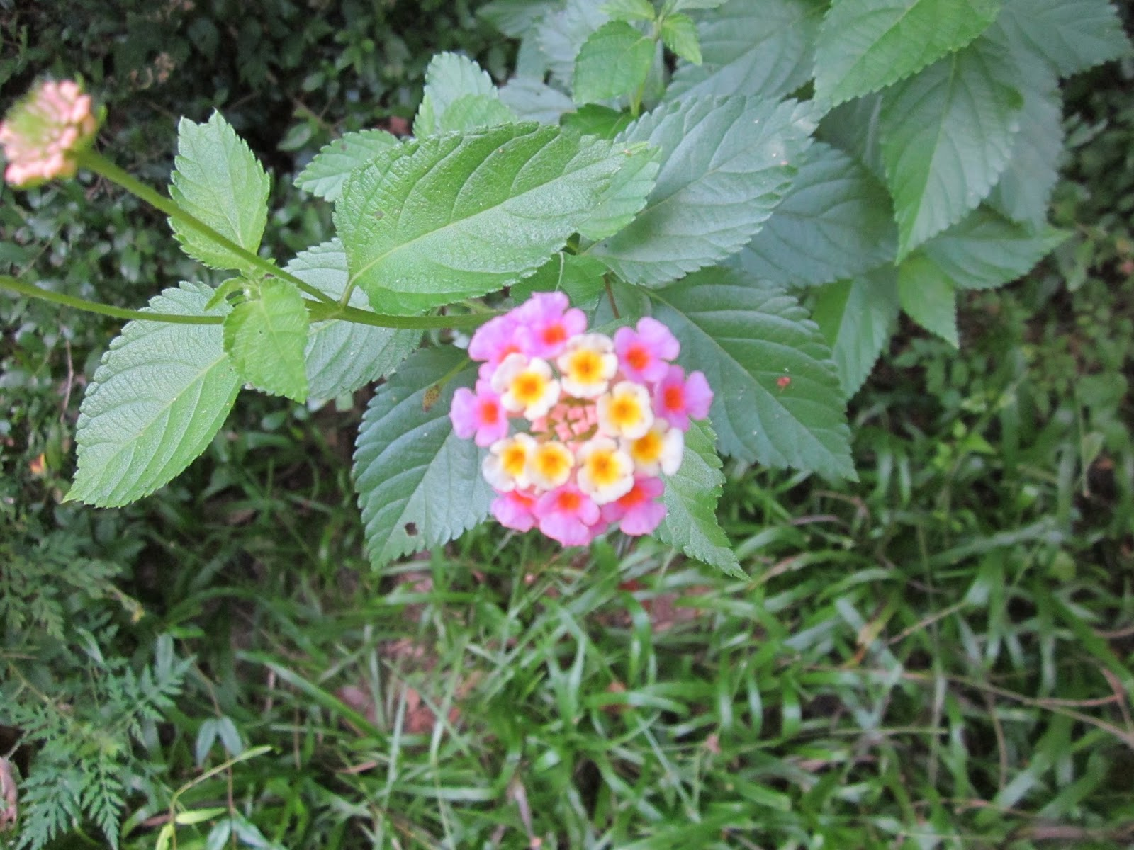This Time The Camera Focused On Flower And It Showed Diffe Colored Flowers Pink In Center Circled By White With Yellow Centers