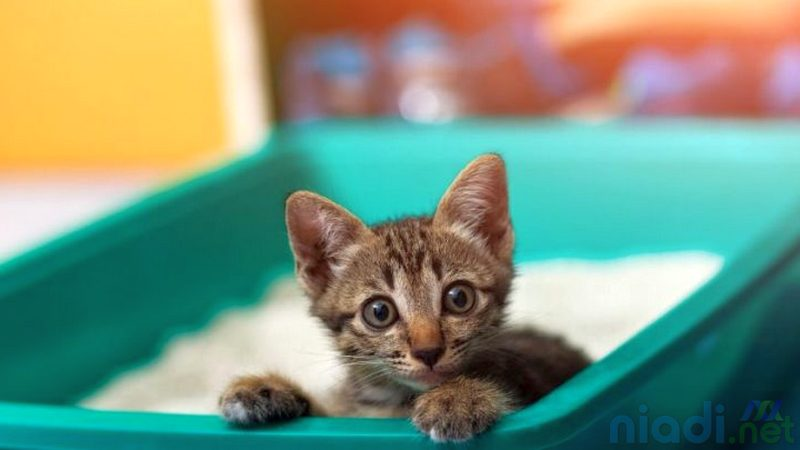 tips mudah cara menghilangkan obat kutu kucing