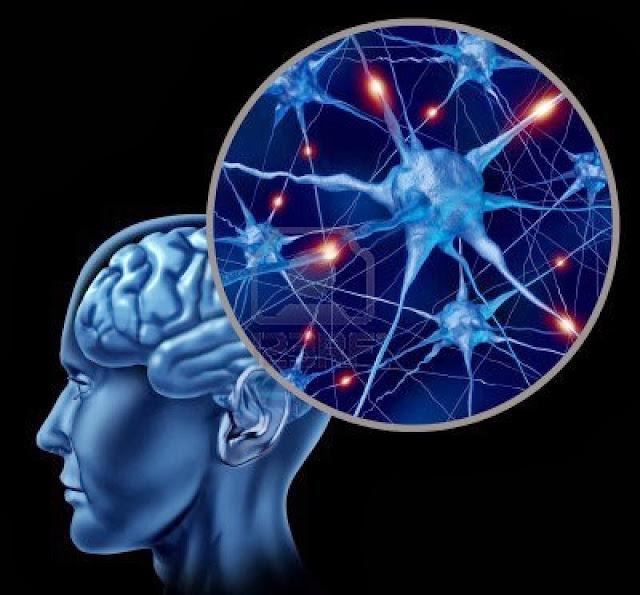 Somos perfectamente capaces de regenerar neuronas