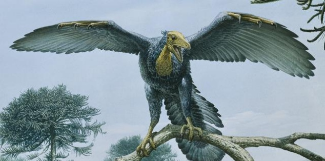 Archaeopteryx y biologia