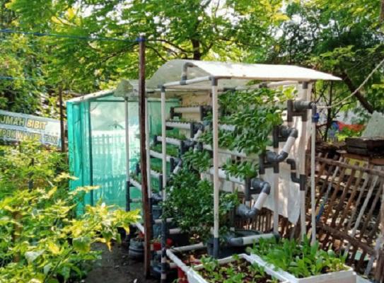 Urban Farming Menjadi Populer di Pulau Seribu