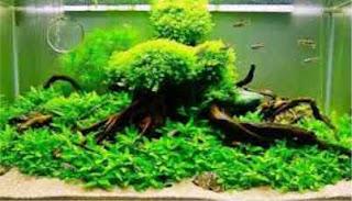 Cara Mengendalikan Tumbuhnya Lumut Pada Akuarium
