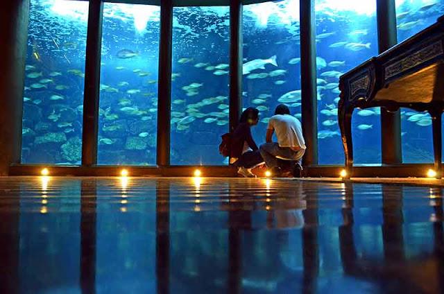 Aquarium Finisterrae