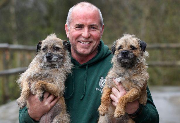 Resultado de imagen para border terrier and owner