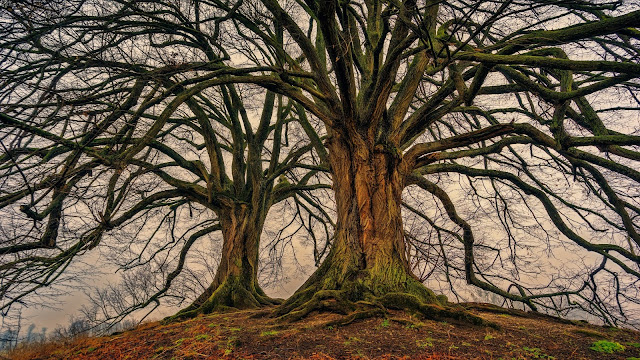 Trim When Trees Are Dormant