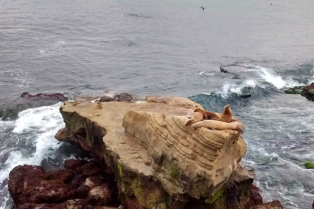 Sea Lions playing King of the Hill.