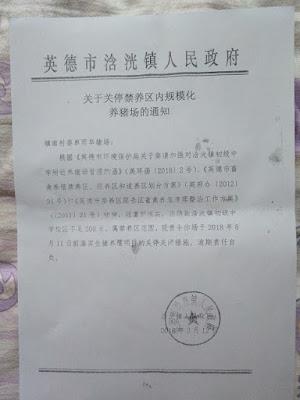猪肉价格暴涨,广东英德养猪专业户朱爱娣流落北京街头