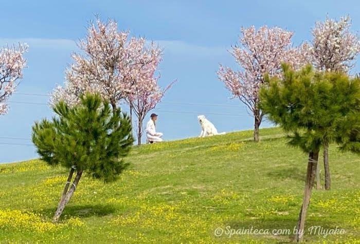 春の陽気で白い犬と女性が芝生の上に座る様子