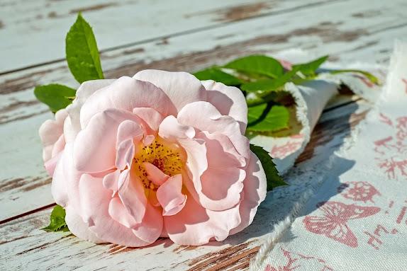 rose in Spanish