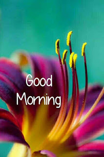 Good Morning  Wishes Photos