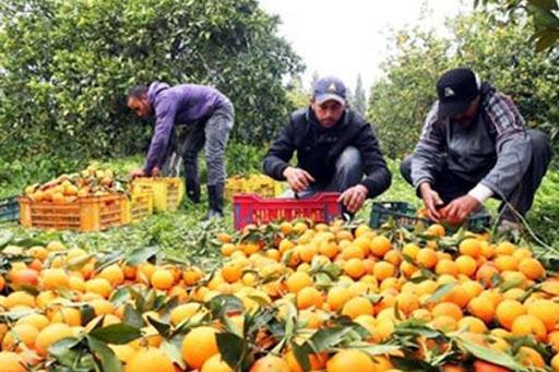 Εταιρεία εξαγωγής αγροτικών προϊόντων ζητάει υπεύθυνο/η συγκομιδής των προϊόντων