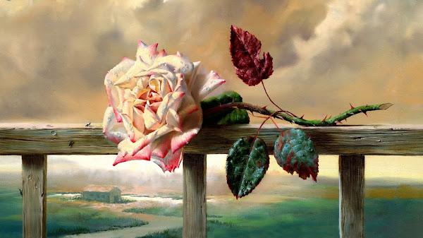mawar layu wallpaper