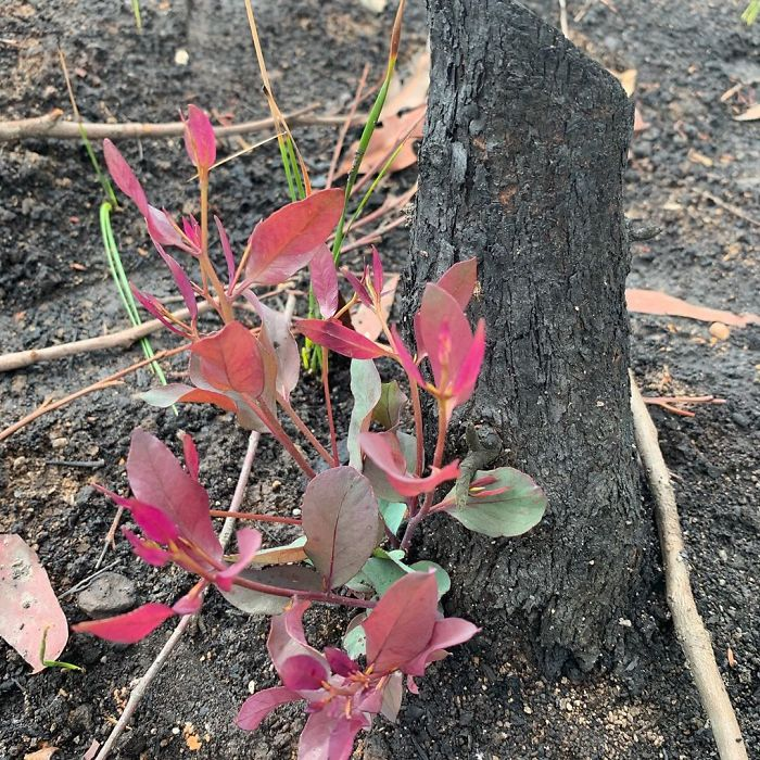20 Amazing Photos of the Land Destroyed by Bushfires In Australia Coming Back to Life