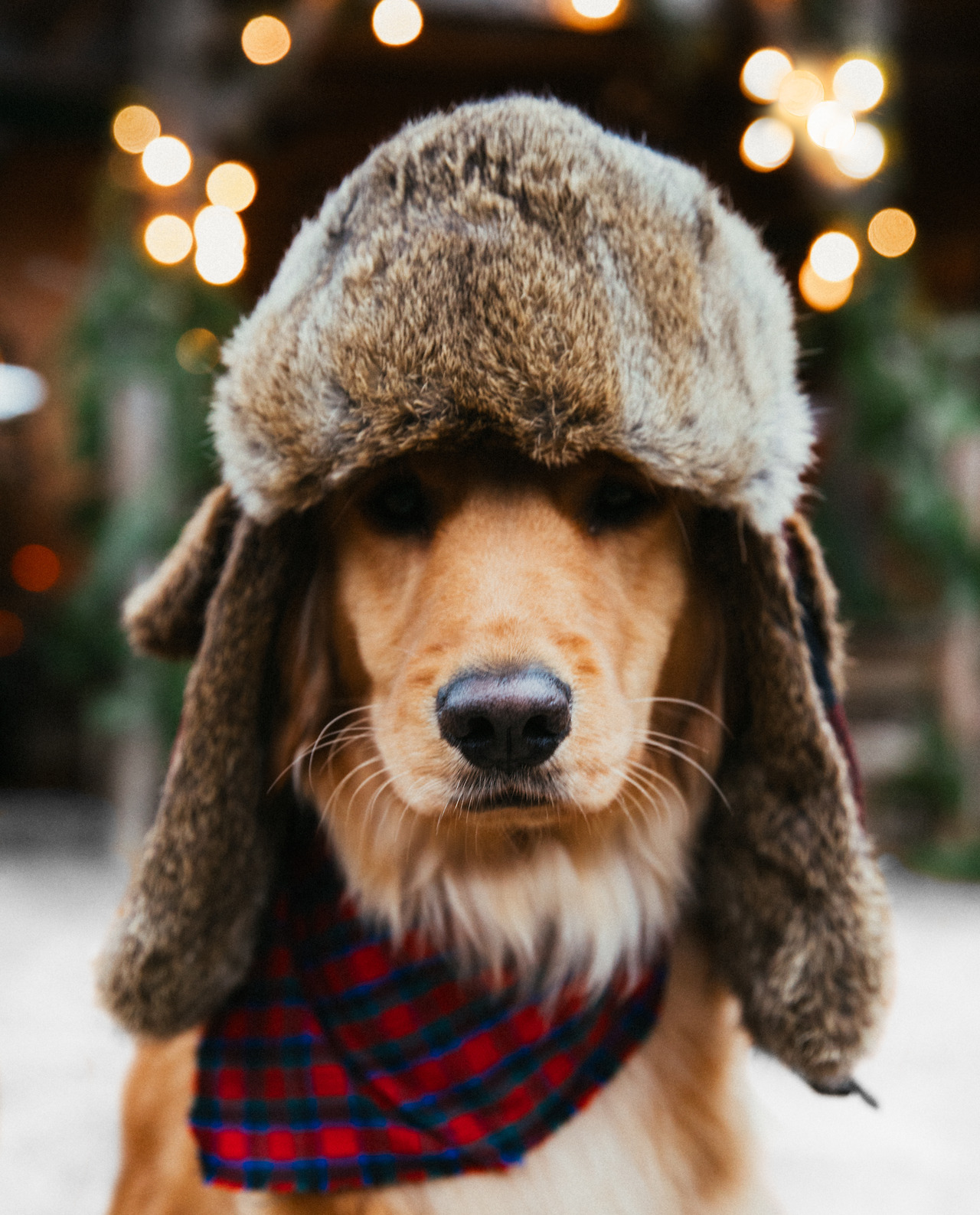 Пес в шапке-ушанке