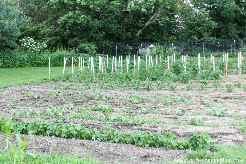 Garden update for June 2020 | On The Creek Blog