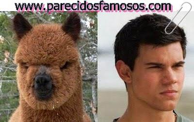 Taylor Lautner Lama