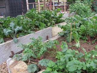 vegetable garden Puriscal