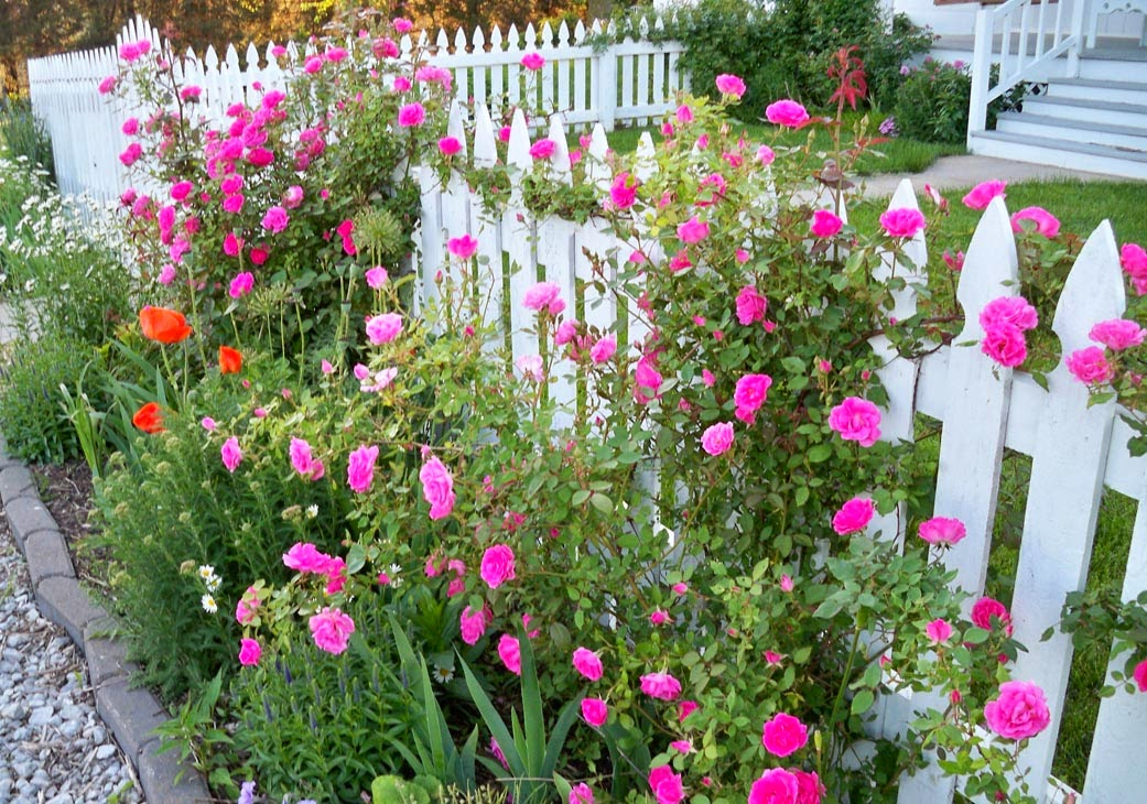Love Garden Roses: Garden Fancy: RIP: Winter Losses