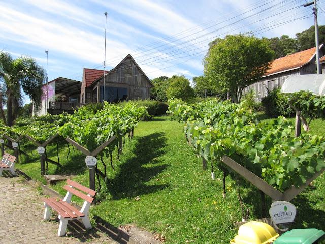 Parque da Festa da Uva: os parreirais