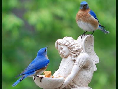 Lovely Cute Bird