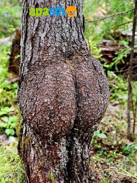 Pohon Paling Aneh Yang Mirip Dengan Manusia