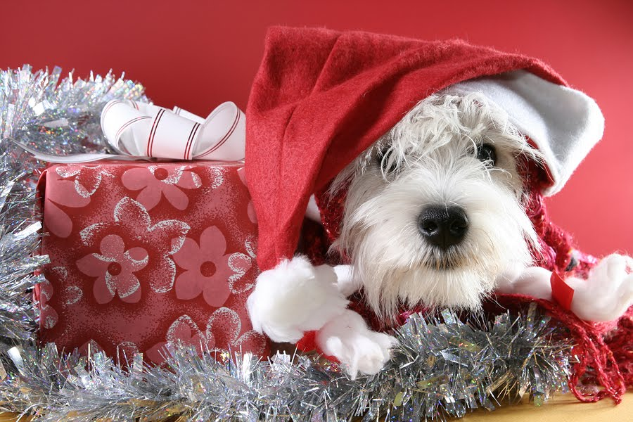 Create Free Wallpaper: Christmas White Puppy Wallpapers