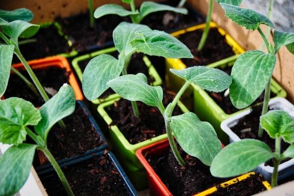 orto-giardino-verdure-natura