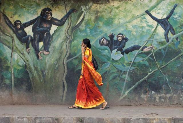 """""""Chòng ghẹo"""" của Pronob Ghosh/ Lalbagh, Bangalore, Ấn độ"""
