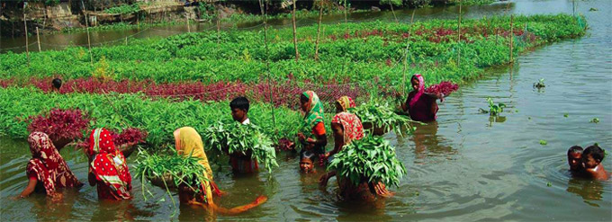 Traditional Floating Garden And Modern Hydroponics Agriculture In Desh