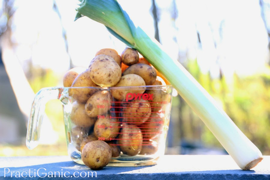 Vegan Potato & Leek Soup