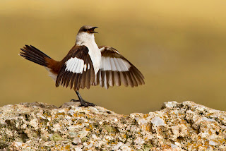 World's Rarest Birds Photo Competition Garners Breathtaking Images slide_289931_2295415