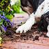 Οι φωνές και η τιμωρία κάνουν κακό στον σκύλο: Τι έδειξε νέα έρευνα